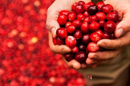 In Japan, the Cranberry is king...