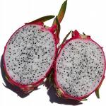 Massive Dragon Fruit Project planned in Vigan, Phillipines
