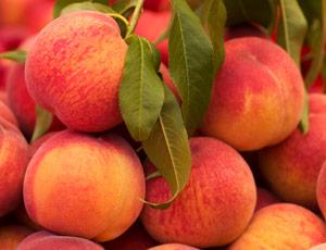 Peach Wine Bonanza
